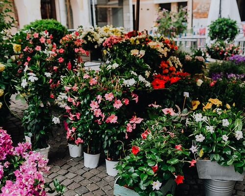flowers-blooming-blossom-italian